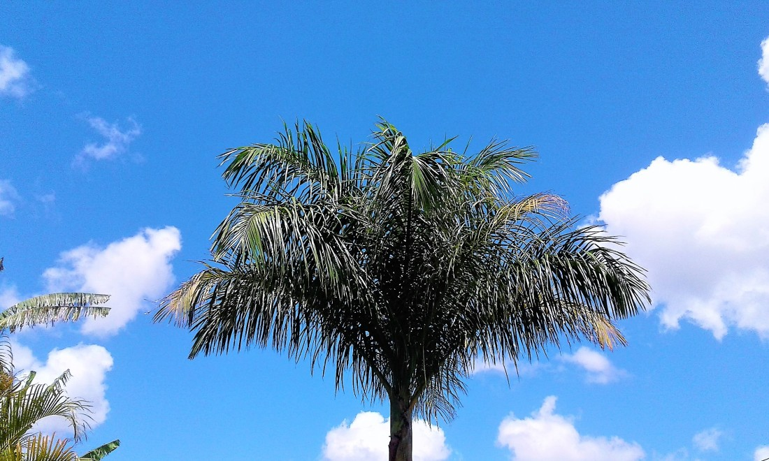 Cotton clouds seen, from my garden, Mauritius. Photo by sharvina.y (my own) on Instagram.